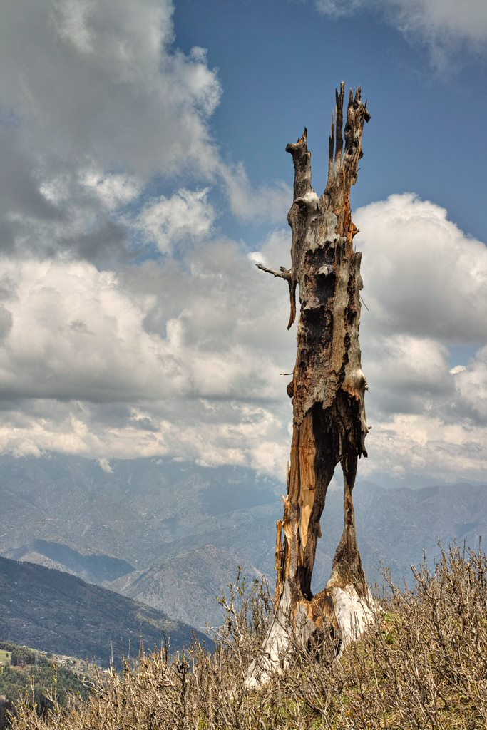 A tree struck by lightning along the trekking trail